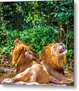 Roaring Lions Metal Print