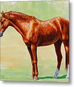 Roasting Chestnut - Morgan Horse Metal Print