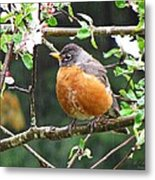 Robin In Apple Tree Metal Print