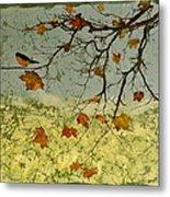 Robin In Maple Metal Print by Carolyn Doe