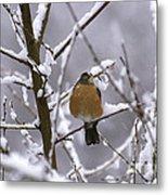 Robin In Snow Metal Print