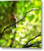 Robin In The Glade Metal Print