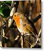 Robin In The Hedgerow Metal Print