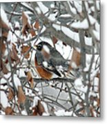 Robin In The Trees Metal Print