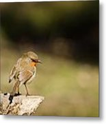 Robin On A Log Metal Print