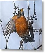 Robin Pictures 84 Metal Print