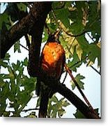 Robin Waiting Metal Print