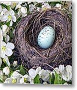Robin's Nest Metal Print