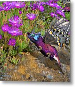 Rock Flower Birguana Fly Metal Print
