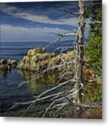 Rock Formations And Trees On The Shoreline In Acadia National Park Metal Print