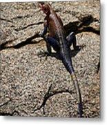 Rock Island Lizard   #8103 Metal Print