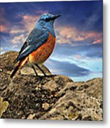Rock Thrush Metal Print
