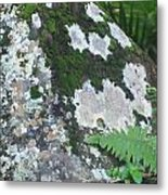 Rock With Moss Metal Print