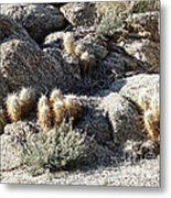 Rocks And Cactus Metal Print