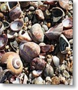 Rocks And Shells Metal Print