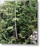 Mountain - Landscape - Trees - Rocky Hillside Metal Print