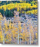 Rocky Mountain Autumn Contrast Metal Print by James BO  Insogna