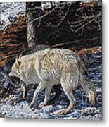 Rocky Mountain Encounter Metal Print by Skye Ryan-Evans