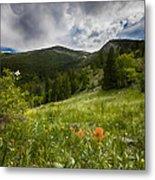 Rocky Mountain Meadow Metal Print