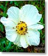 Rocky Mountain Wild Flower Metal Print