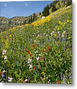 Rocky Mountain Wildflower Landscape Metal Print