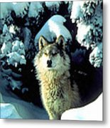 Rocky Mountain Wolf Metal Print
