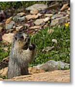 Rodent In The Rockies Metal Print