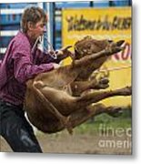 Rodeo Fit To Be Tied Metal Print