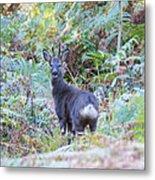 Roe Buck In Woodland Metal Print