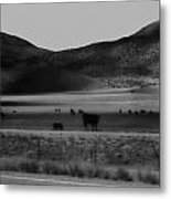 Rolling Hills And Cattle In Black And White Metal Print