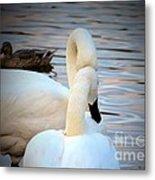 Romance Of The White Swans Metal Print