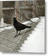 Roof Crow Metal Print