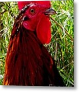 Rooster The Male Chicken Metal Print