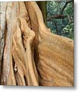 Root Of A Tree Nature Background Metal Print