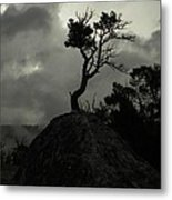 Rooted In Stone Metal Print