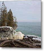 Rooted In Winter Metal Print