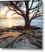 Roots Beach Metal Print