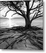 Roots Beach In Black And White Metal Print