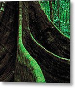 Roots Of A Giant Tree, Daintree Metal Print
