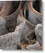 Roots Of The Fig Metal Print
