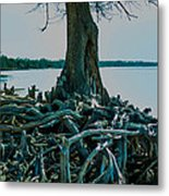 Roots On The Bay Metal Print