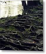 Roots On White River Metal Print
