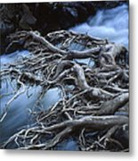 Roots Over Ozark Stream Metal Print