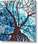 Roots To Branches II Metal Print