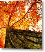 Roots To Branches IIi Metal Print