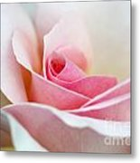 Rosa A Whiter Shade Of Pale  Metal Print