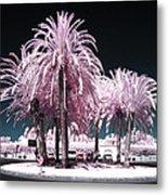 Rosa Palms Metal Print