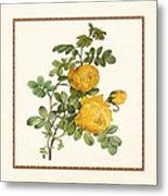 Rosa Sulfurea -yellow Rose  Square Metal Print