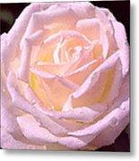 Rose 169 Metal Print