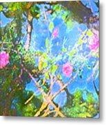 Rose 182 Metal Print by Pamela Cooper